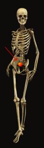 skeleton m