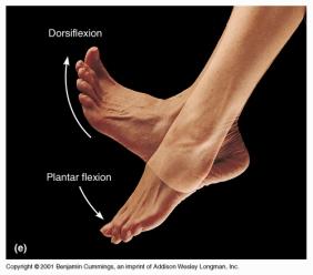 dosiflexion_plantar_flexion (1)