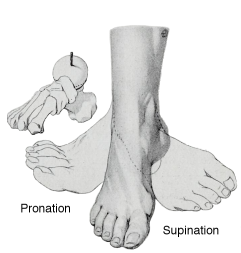 pronation & supination.png